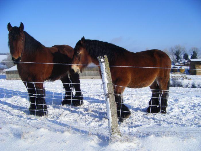 chevaux700
