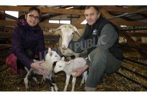hubert et lys mony elevent 500 moutons a francheville photo300px