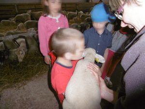 mouton Abrepin